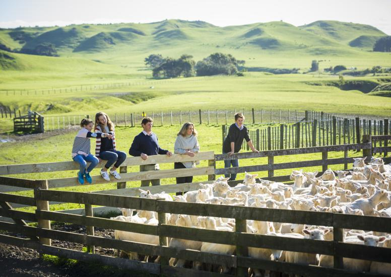 Cape Kidnappers Shepherding Tour 4
