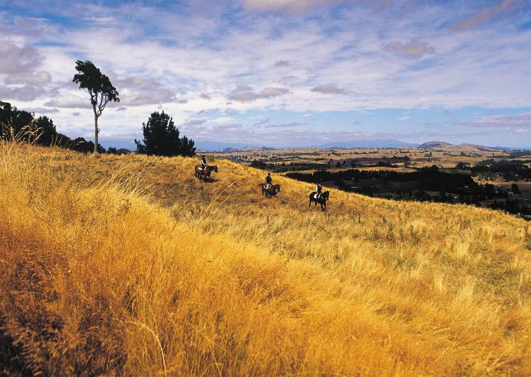 Huka Lodge Horseriding
